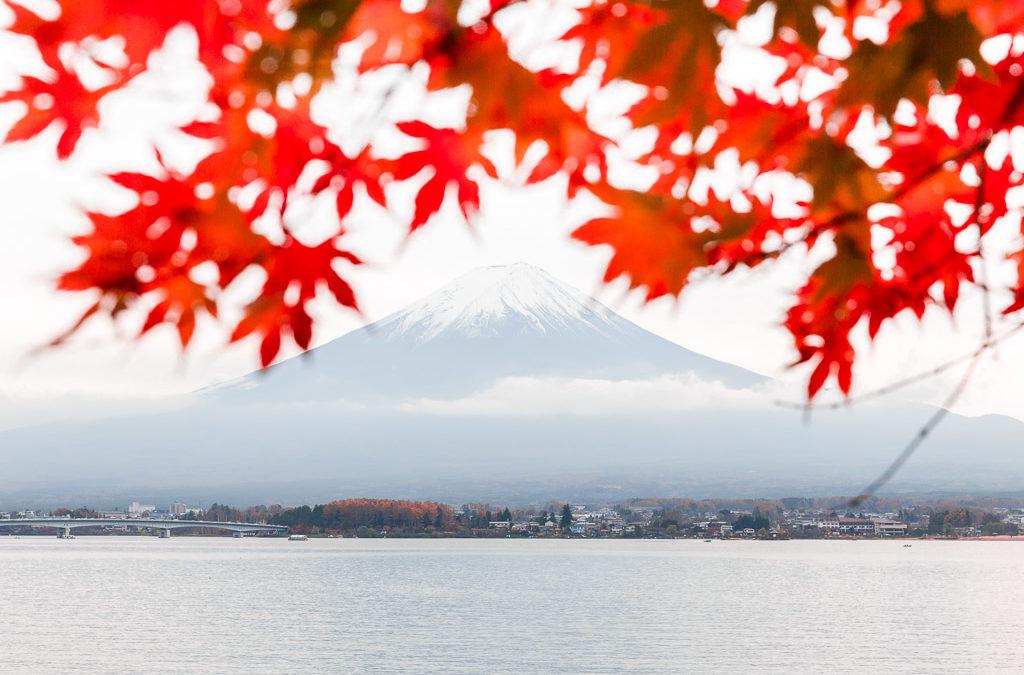 Japan fuji momiji