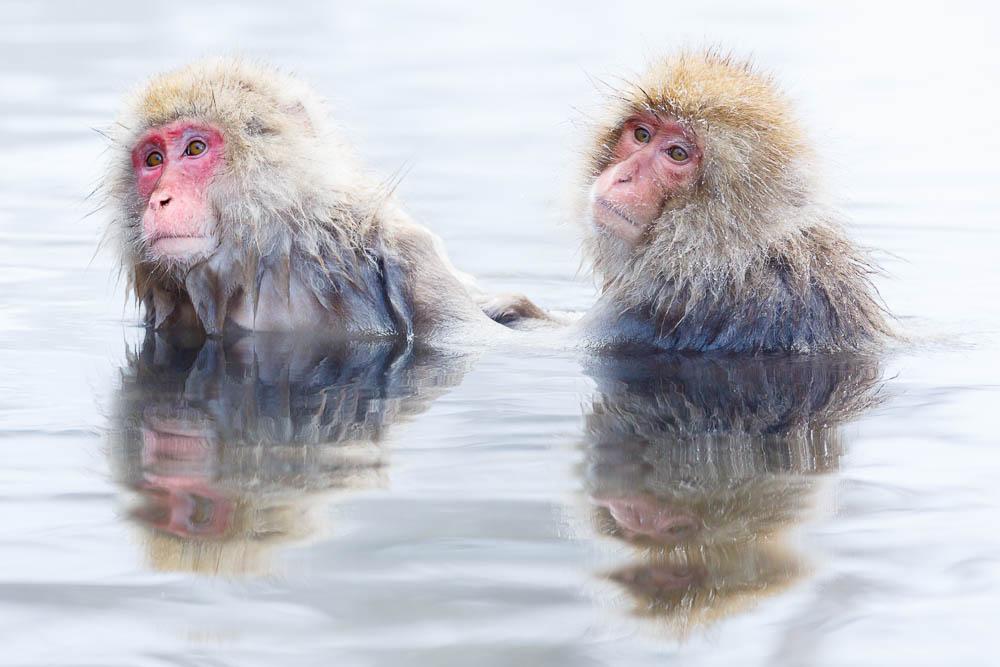 Monkey japan nagano