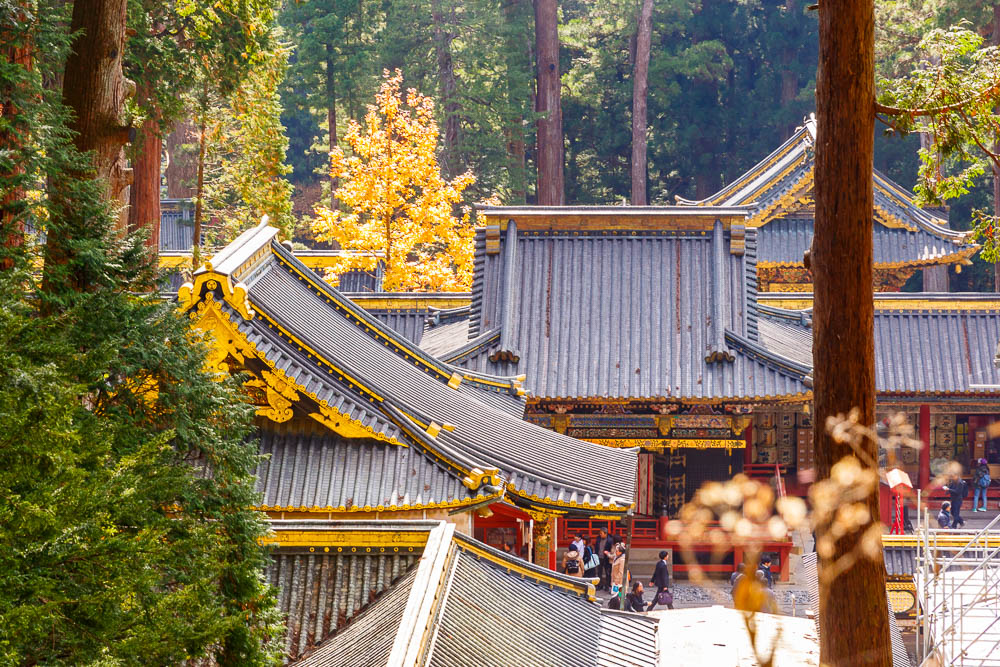 Japan nikko web momiji35