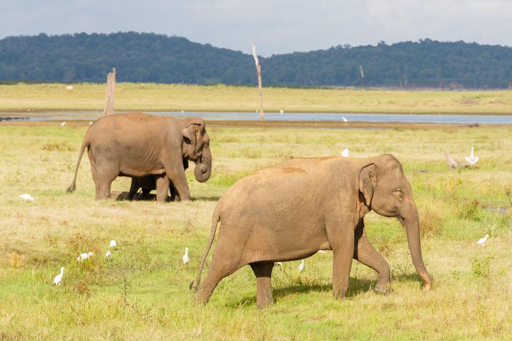Sri Lanka photo tour 62