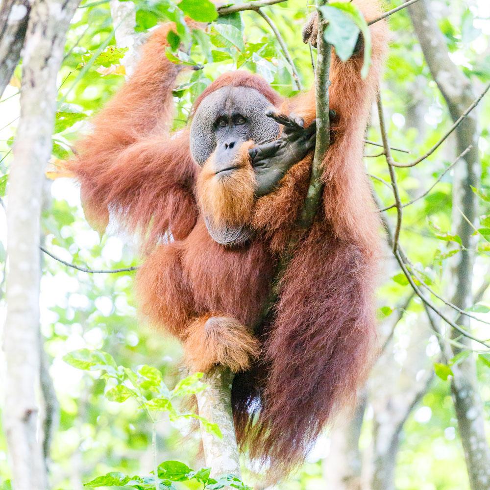 Sumatra Indonesia 07