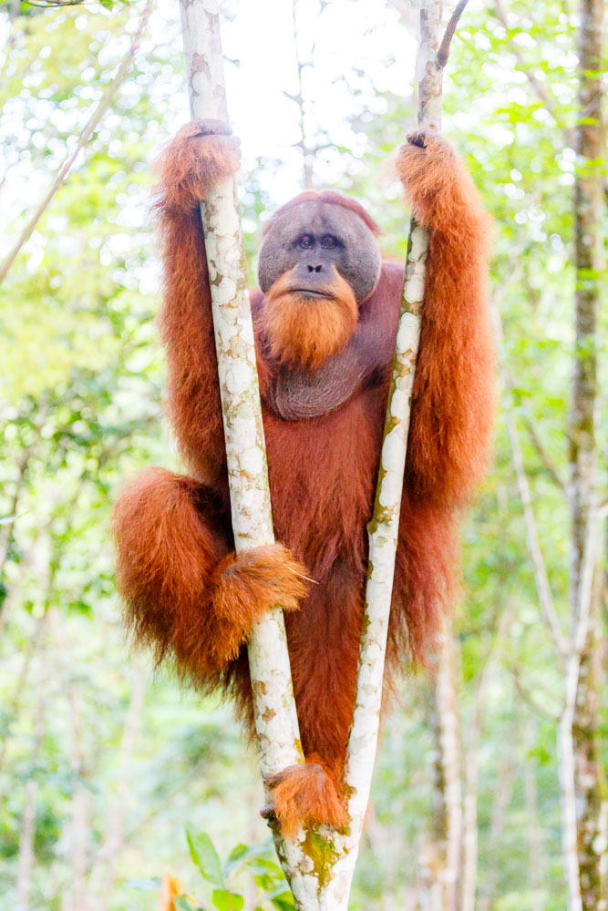 Sumatra Indonesia 08