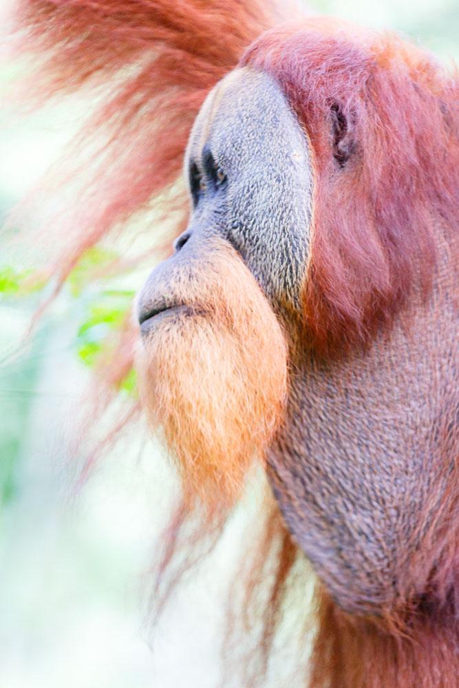 Sumatra Indonesia 09
