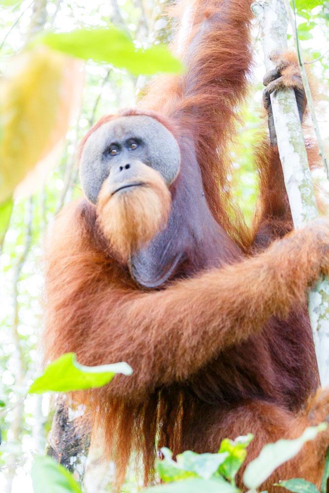 Sumatra Indonesia 10
