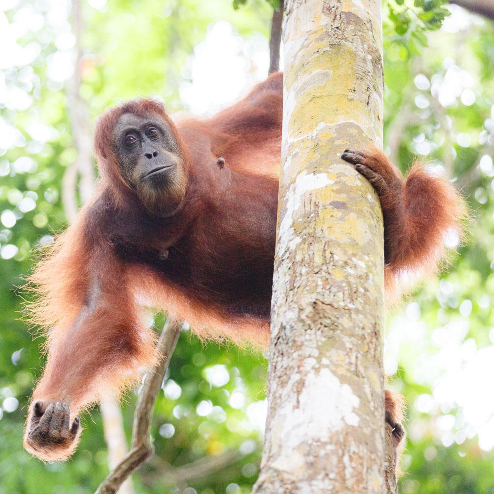 Sumatra Indonesia 11