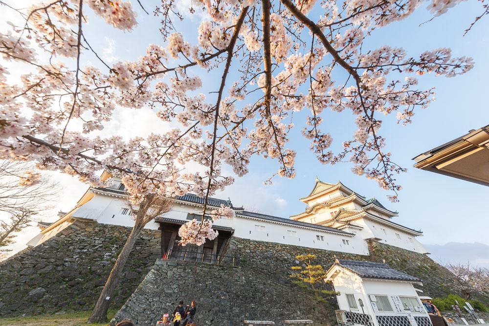 Wakayama spring cherry blossom 09