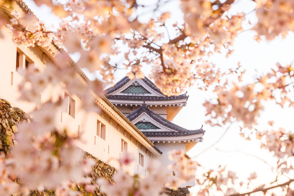 Wakayama spring cherry blossom 11