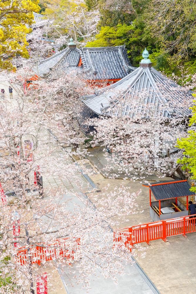 Wakayama spring cherry blossom 31