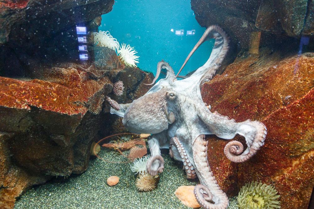 Japan Miyajima aquarium