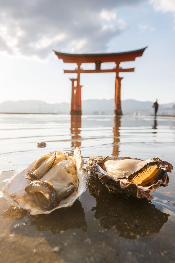 Japan Miyajima oysters 09