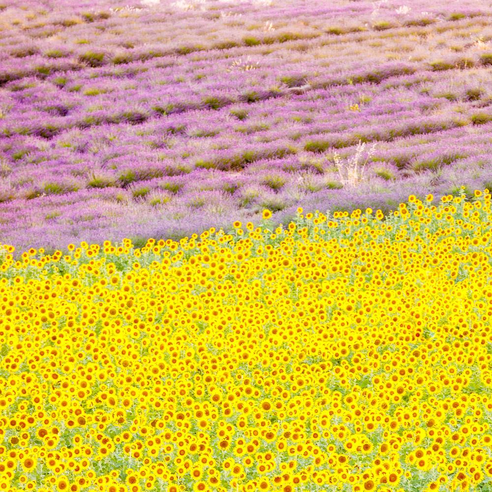 France Alpes de Haute Provence photo Loic Lagarde Mai 2020 101