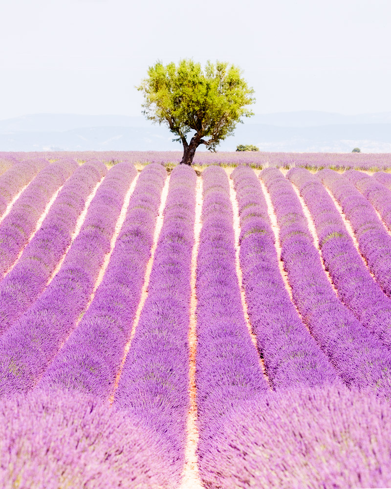 France Alpes de Haute Provence photo Loic Lagarde Mai 2020 106
