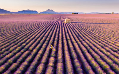 Photograph the Valensole Plateau