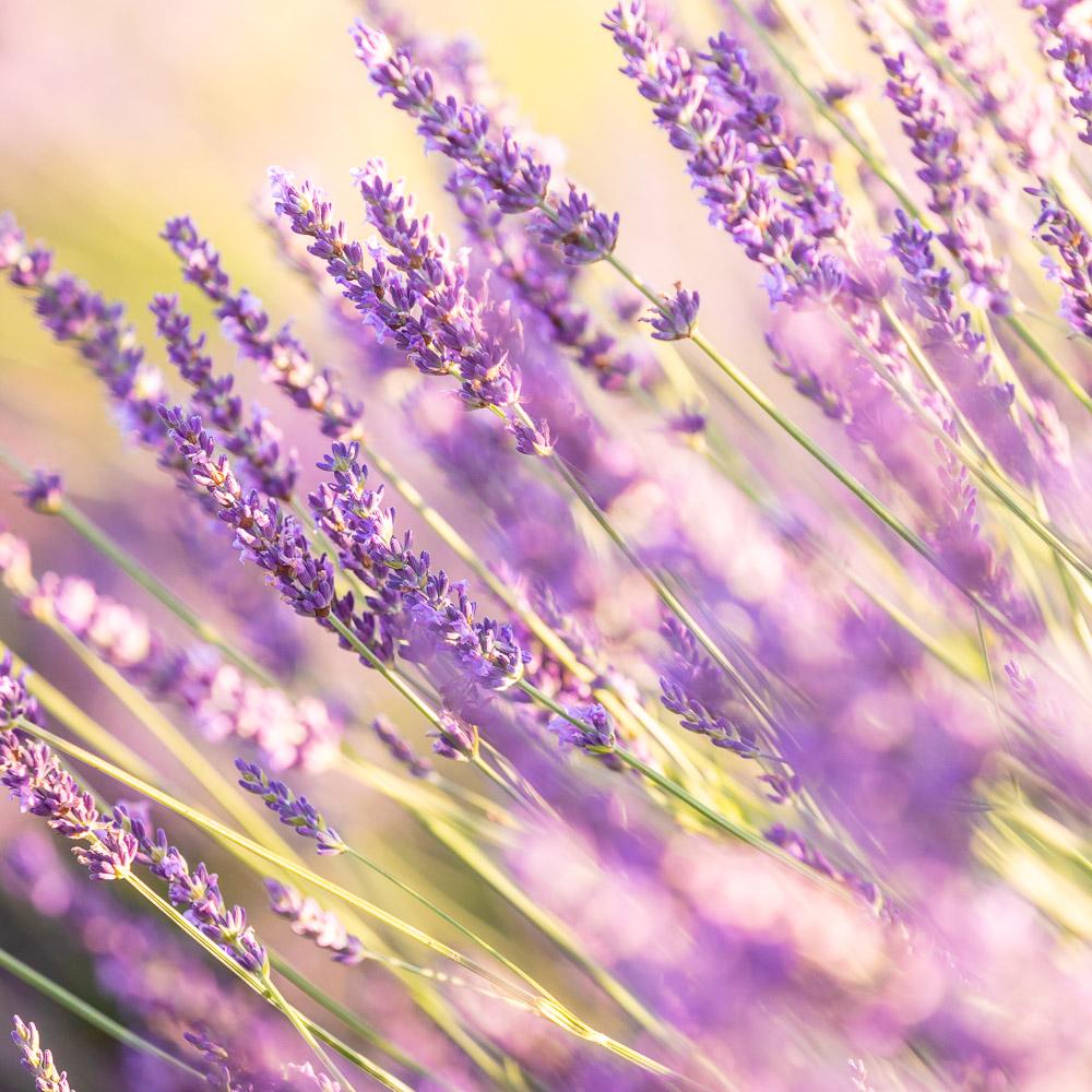 France Alpes de Haute Provence photo Loic Lagarde Mai 2020 80