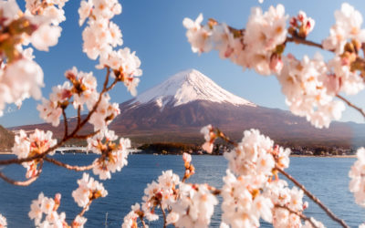 Top 10 photo Spots for Cherry Blossom in Japan