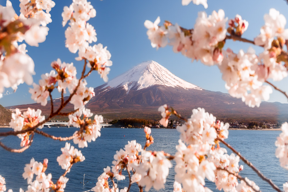 Japan Cherry Blossom Loic Lagarde