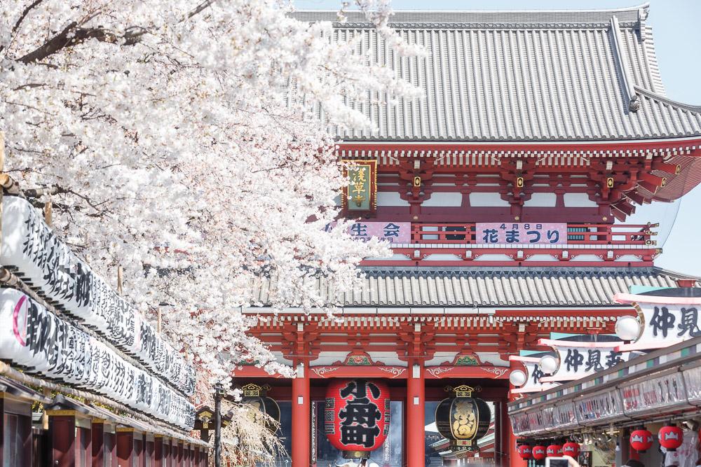 Japan Cherry Blossom Loic Lagarde Taito Asakusa Sensoji