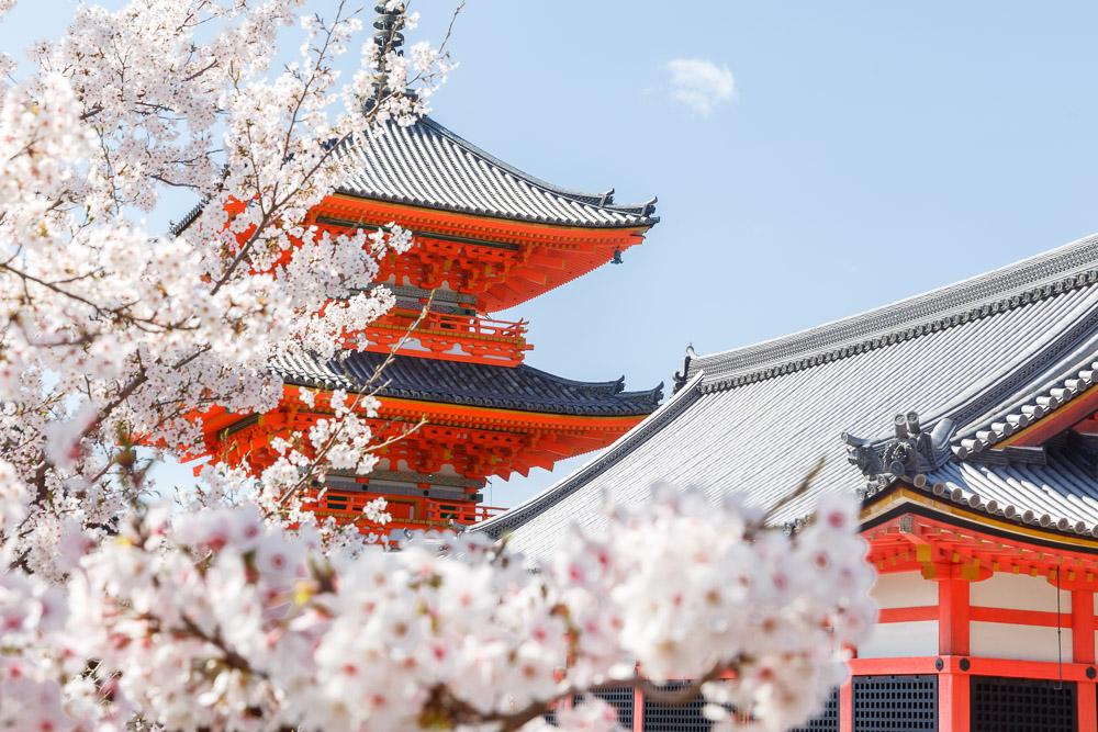 Japan Cherry Blossom Loic Lagarde kiyomizu dera