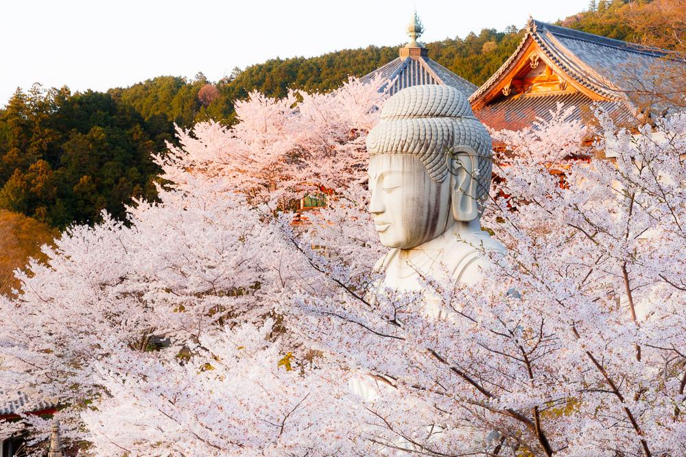 Japan Cherry Blossom Loic Lagarde Nara