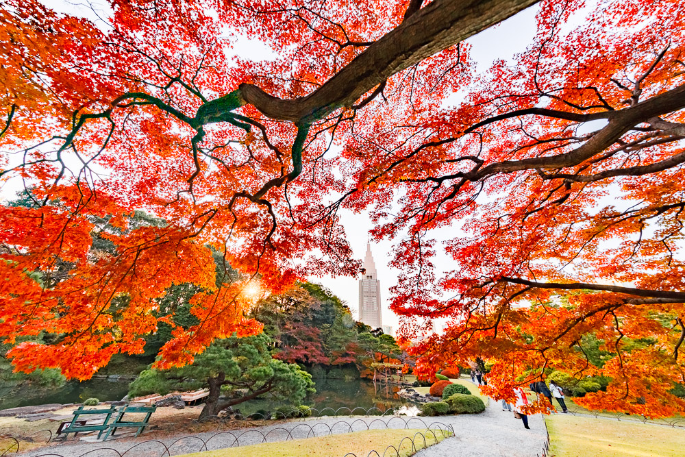 Japan Tokyo Shinjuku Loic Lagarde 50
