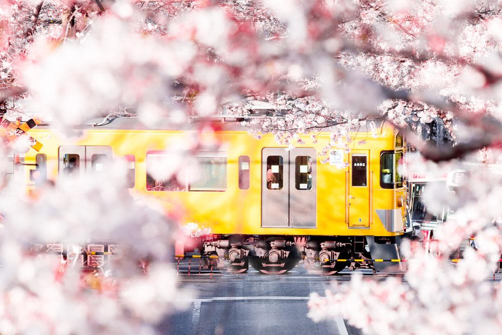 Tokyo Japan Cherry Blossom Top 10 Loic Lagarde 01