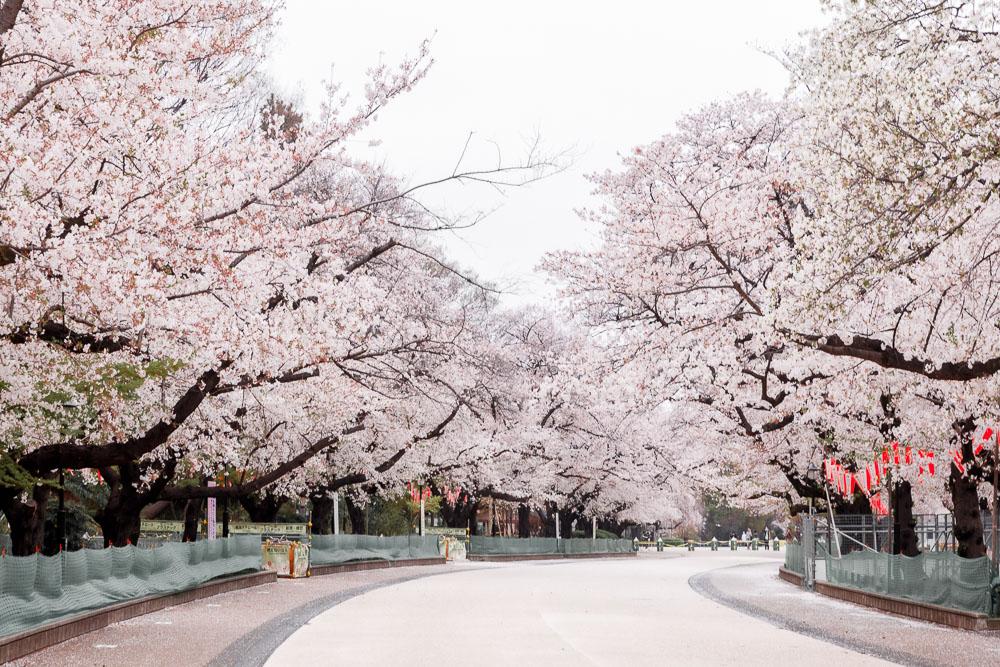 Tokyo Japan Cherry Blossom Top 10 Loic Lagarde 02