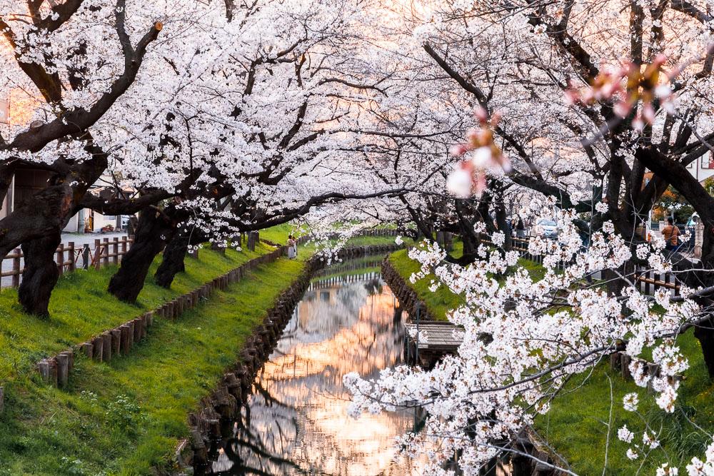 Tokyo Japan Cherry Blossom Top 10 Loic Lagarde 03