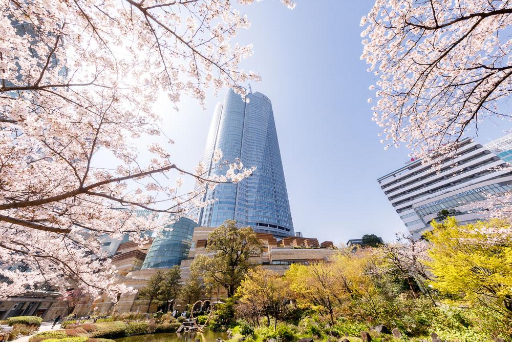Tokyo Japan Cherry Blossom Top 10 Loic Lagarde 04