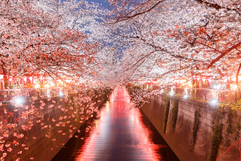 Tokyo Japan Cherry Blossom Top 10 Loic Lagarde 05