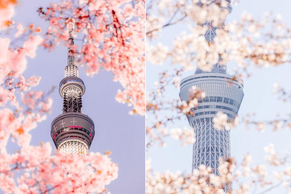 Tokyo Japan Cherry Blossom Top 10 Loic Lagarde 06