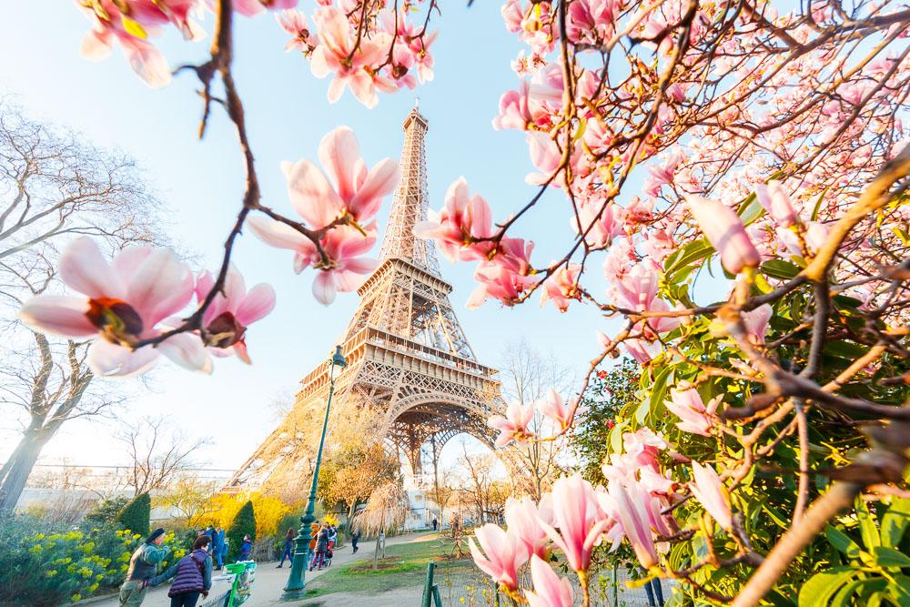 Paris Sping Printemps loic lagarde-12 - magnolias Champs de Mars early mid march