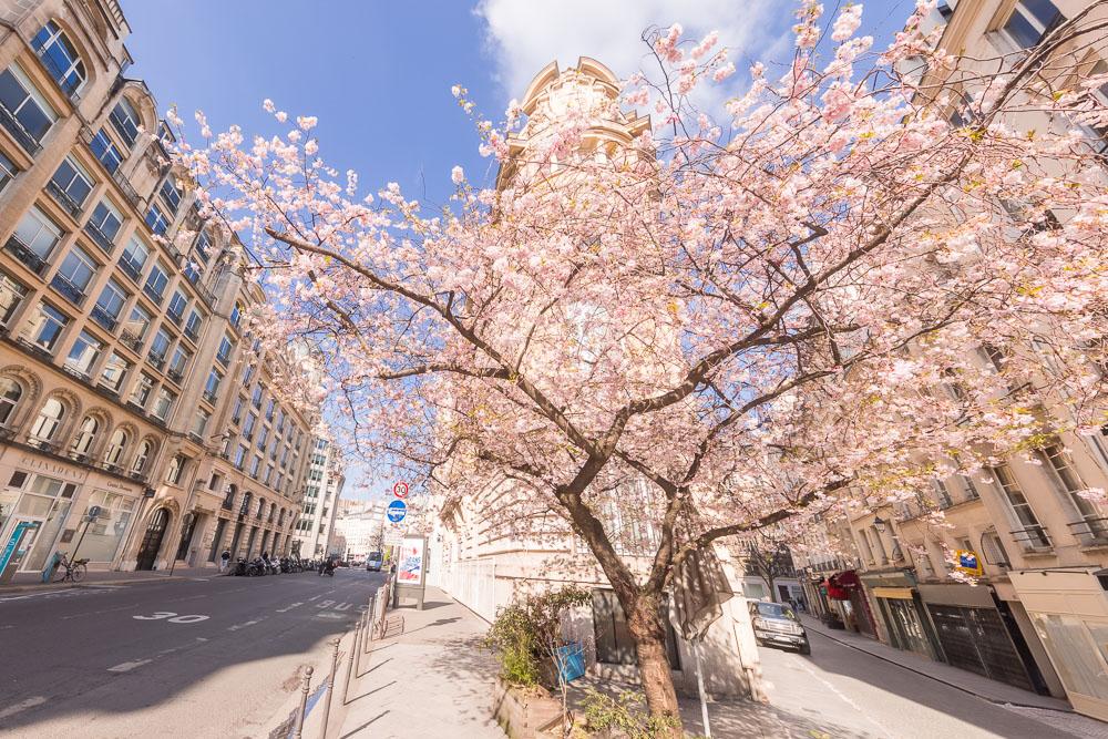 Paris Sping Printemps loic lagarde -15 - rue Montmartre - mid march