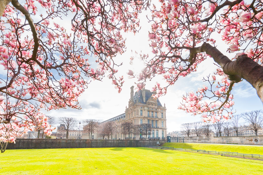 Paris Sping Printemps loic lagarde -23 - Louvre magnolias early mid march