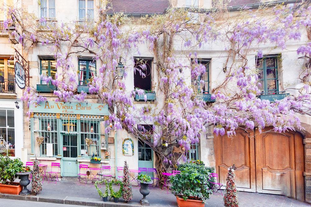 Paris Sping Printemps loic lagarde-4 - au vieux paris d'arcole - ile de la cité - mid april